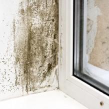 L'humidité ascensionnelle : source flagrante de dégradation de l'habitation
